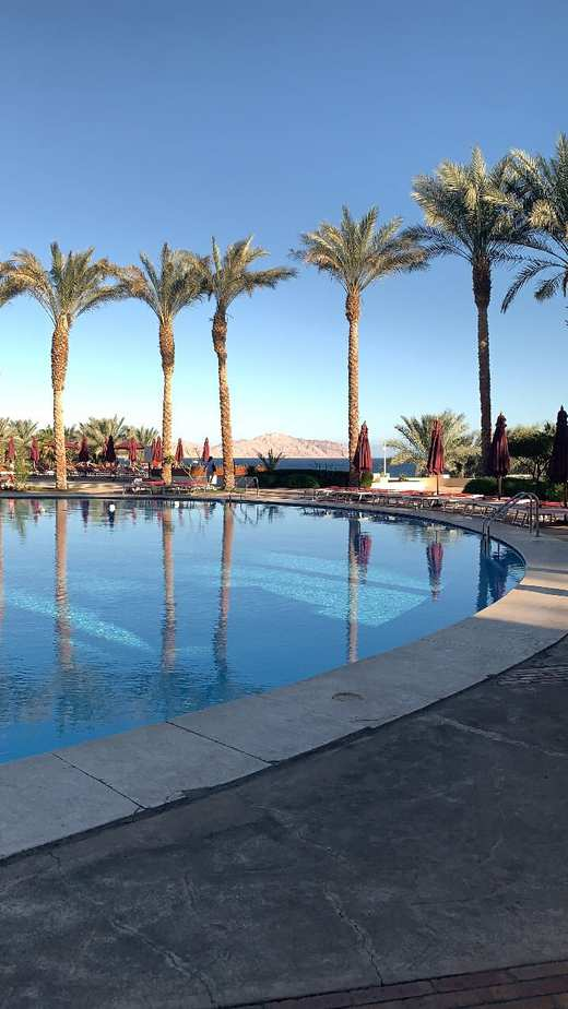 Stunning views of towering palms from the pool